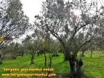 İzmir bergama aziziye de satılık köy merkezinde içine ev yapılabilir