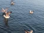 izmir dikili çandarlı egemavikent satılık deniz tarafında villa arsası