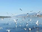 İzmir foça gerenköy satılık  izmir yoluna denize yakın çift villalık