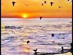 İzmir dikili çandarlı satılık alkoru sitesi arkası deniz manzaralı